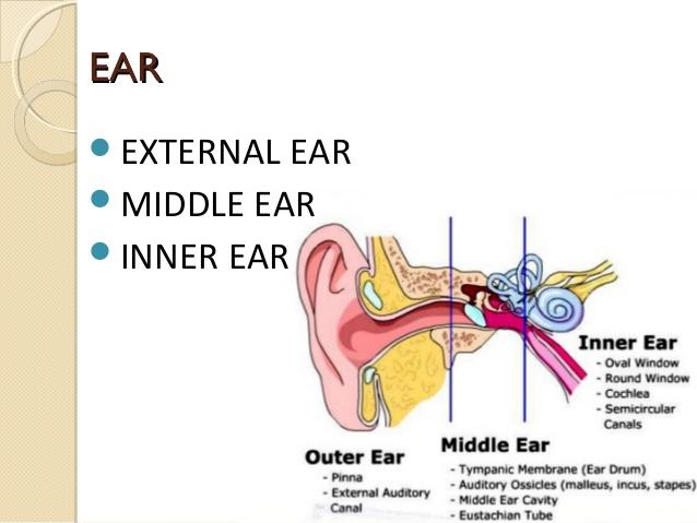 آستانه شنوایی انسان